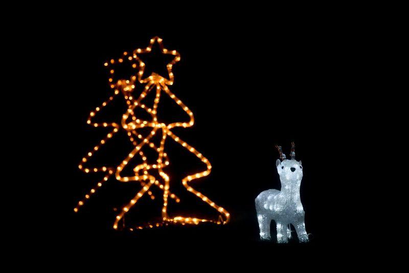 Deer kitsch Christmas Celebration Reindeer Night Christmas Decoration Animal Representation No People