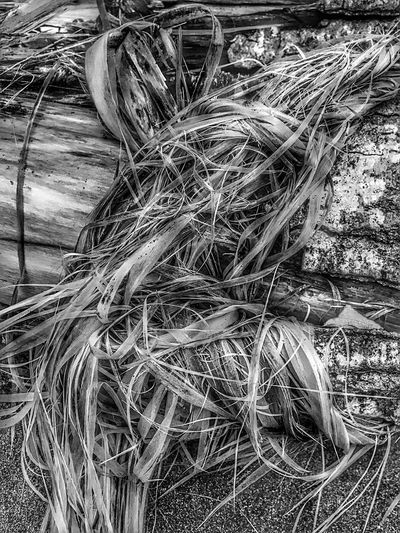 Close-up Outdoors Nature Blackandwhite Beach Sand Nature Abstract Nature Perspective Natural Condition Textured  Views Beauty In Nature Driftwood Patterns In Nature Log Black And White Weathered Tree Trunk