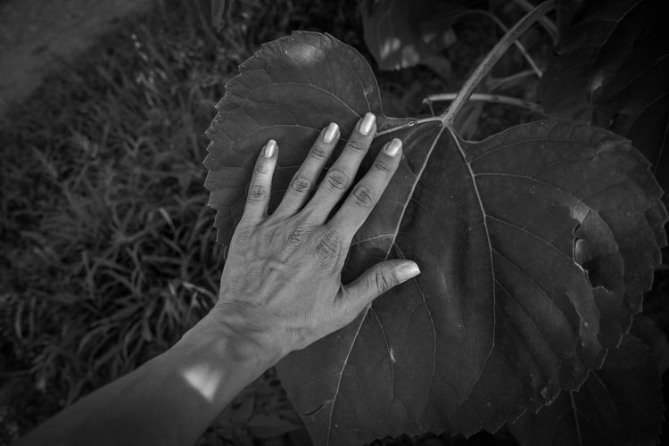 Close-up of person hand holding leaf on field