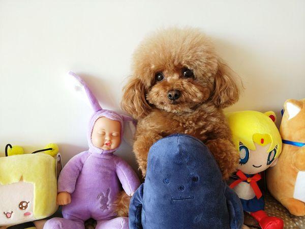 dudu Toy Stuffed Toy Dog Cute Mammal Pets Teddy Bear