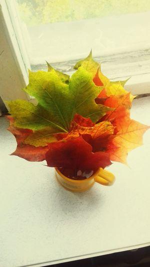 Autumn Autumn Colors Autumn Leaves Authentic Moments Autumn Window Leaves🌿