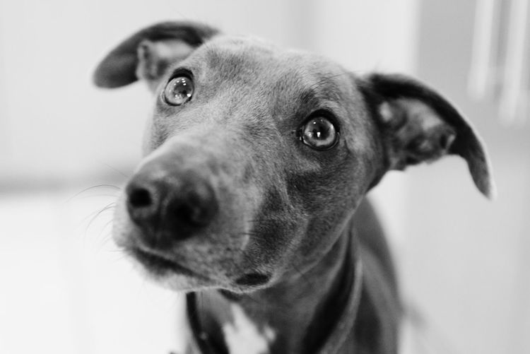 Walk me, please Animal Animal Body Part Animal Eye Animal Head  Animal Nose Animal Themes Canine Close-up Dog Domestic Domestic Animals Feed Me Focus On Foreground Indoors  Looking Looking Away Mammal No People One Animal Pets Please Walk Me Portrait Snout Vertebrate