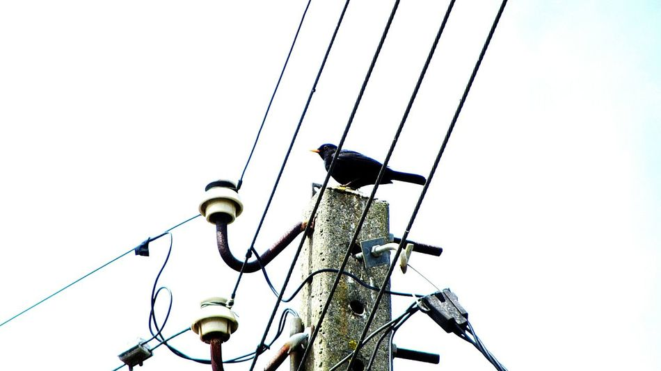 Watching the bird, on the electric line.. Electric Lines EyeEm Birds Bird Photography Taking Photos EyeEm Best EditsEyeEm Best Edits