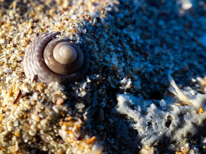 Shell Animal Wildlife Animal Animal Themes Mollusk Invertebrate Animals In The Wild Sunlight No People Beach Close-up Animal Shell Nature Sand Seashell Beauty In Nature