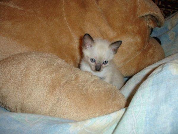 It is my kitten.