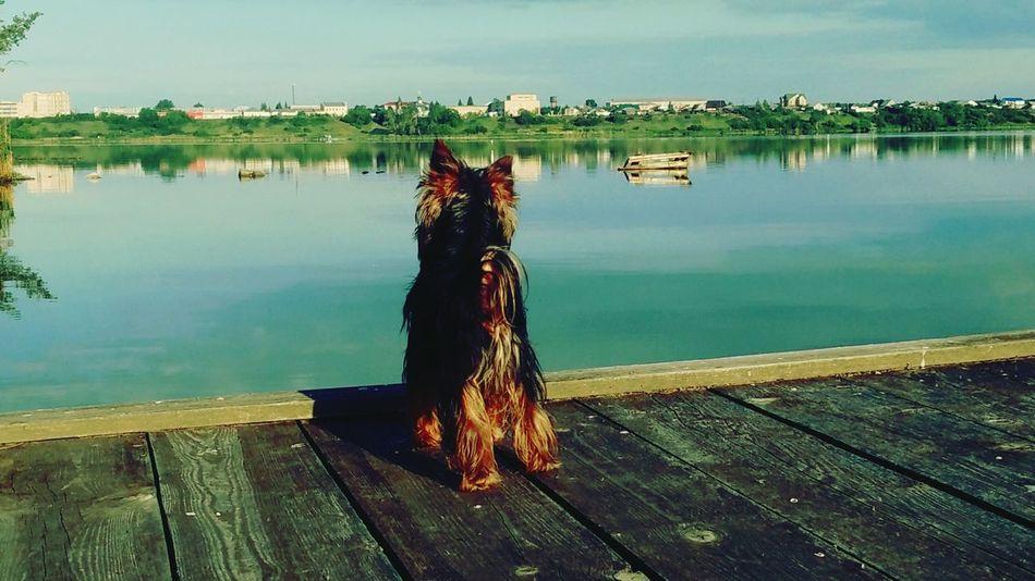 Hello World Dog Relaxing чудо озеро утро блаженство свежесть краски природы умиротворение задумчивость терапия думки Россия Russia Beutiful  Morning Good Photo