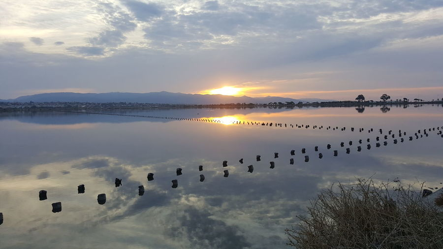 Sunset Outdoors Sky Sun Nature No People Cloud - Sky Lake Beach Tranquility Animal Wildlife Flamingo Beauty In Nature Scenics Water Day Bird Low Tide Horizon Over Water Sardegna😍😍👍👌 Cagliari, Sardinia Beauty In Nature Landscape Symmetry Animals In The Wild