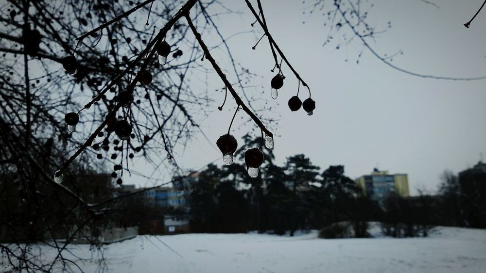 Cold Winter Natural