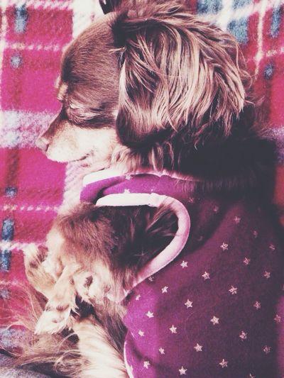 My Dog Dog