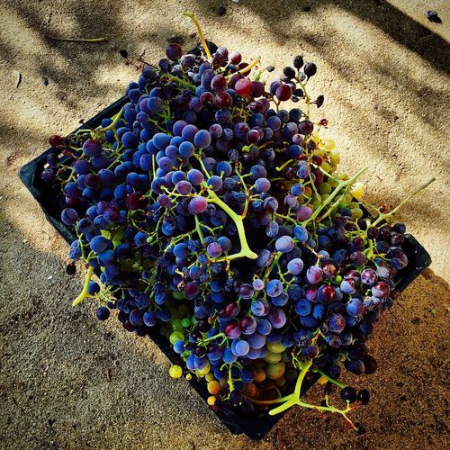Hermoso fruto del placer Uvas Uva Frutas Colors First Eyeem Photo