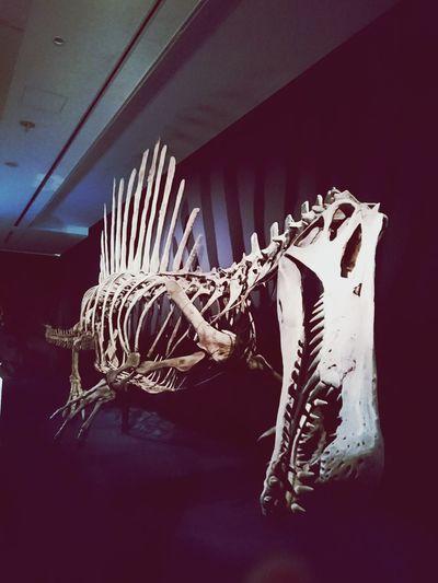Close-up Extinct Dinosaur Indoors  No People Day 恐竜 Long Goodbye 迫力