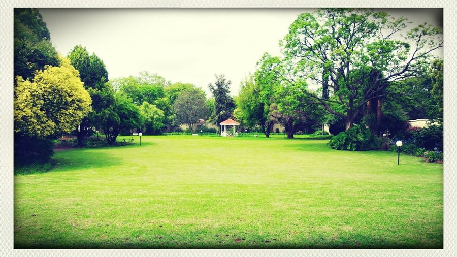 What a beautiful garden