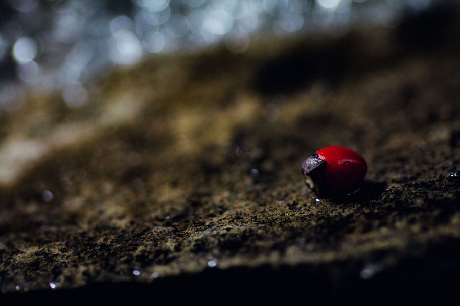 Series:The Red one Strangedays ◀️ Different Place Abstract Artworks Atmospheric Mood Bokeh Capture The Moment Original Experiences Darkness And Light Still Life Photography EyeEm Nature Lover Fine Art Fine Art Photography Getting Inspired 43 Golden Moments Light And Shadow Macro Macro Beauty Minimalism Nature Nature's Diversities Plants Red Still Life Water Break The Mold BYOPaper! Rethink Things