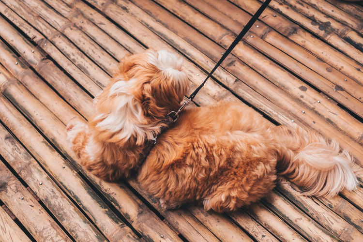 High angle view of dog resting