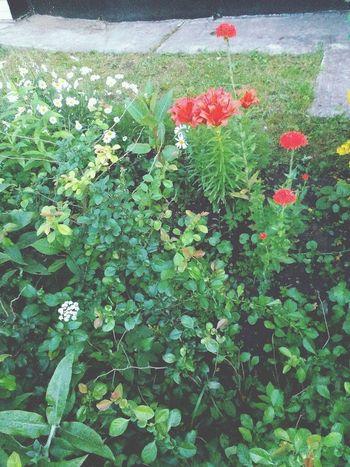 Hello World Flowers Flower Collection Red Redflowerpower Hello World Biutifull Photo Russia Green Trees