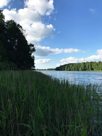 Scenic view of field by lake against sky