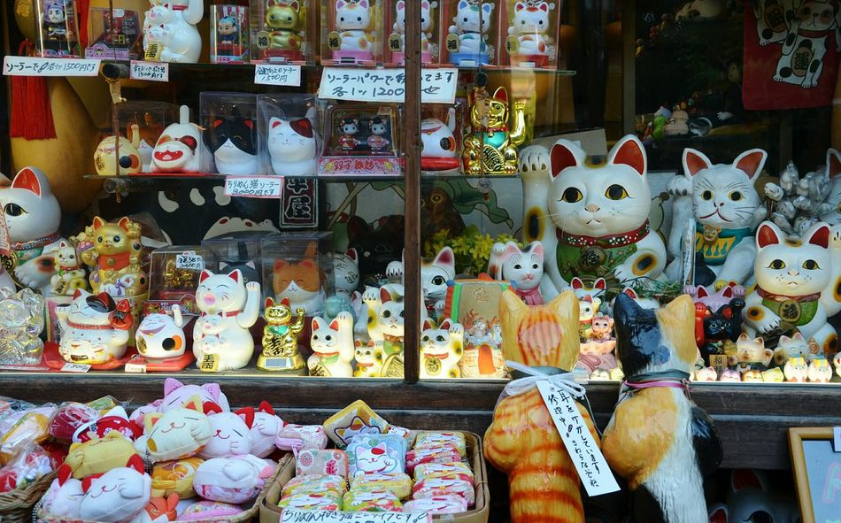 Lucky Cat Cats Shop Japanese Style Japan Scenery Japanese Culture Japan Window Shopping Up Close Street Photography Live Love Shop Ultimate Japan Colour Of Life