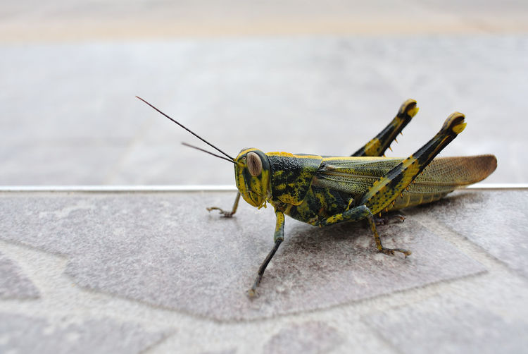 Close-Up Of Grasshopper On Walkway