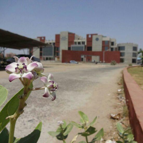 @instagram_ahmedabad Instagram_ahmedabad Gujarat Technology University ahmedabad engineering college flora flowers nature building defocus nofilter instaclick instapic clickoftheday photooftheday me friends webstagram followme india india_gram_bnw