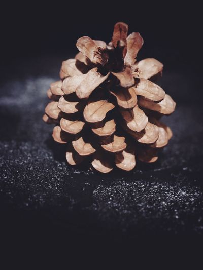 Pine cond on black Holidays Decoration Moody Dark Christmas EyeEm Selects Still Life Indoors  No People Food Close-up Food And Drink Brown Black Background Pine Cone