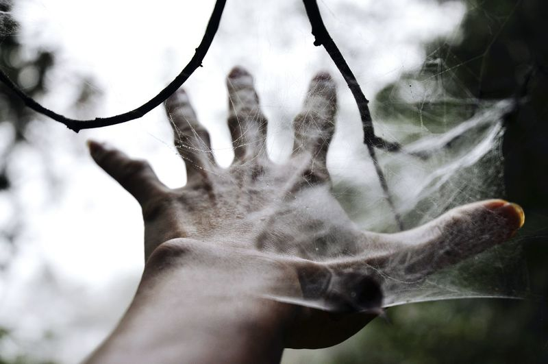 Cropped Image Of Hand In Spider Web