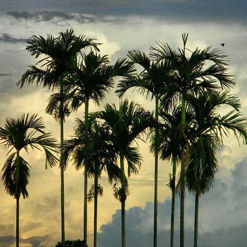 Arka Clicks Countryside Tripura Incredible_india
