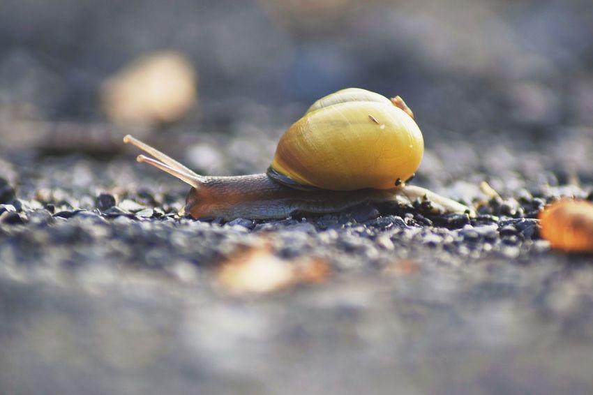 Snail Wildlife Wildlife & Nature Animal Wildlife Close-up Nature Outdoors No People Fall
