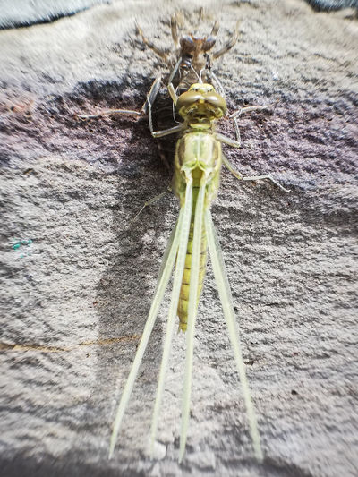 High angle view of insect on wood