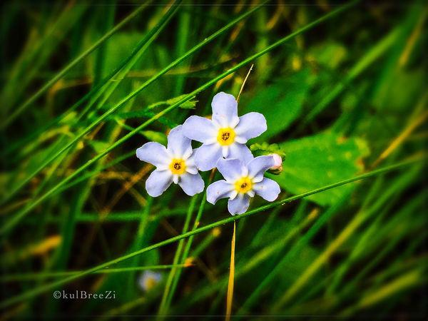 Fairie flora🔍🌱 Taking Photos StreamzooVille Summer2015 My Love Life EyeEm Nature Lover