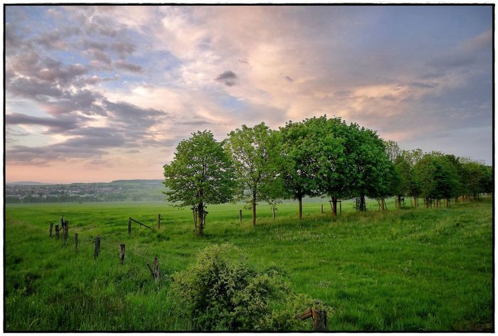 field in the evening light Beauty In Nature Field Landscape Lawoe Nature No People Outdoors Sky Sundown Tranquil Scene Tranquility Tree