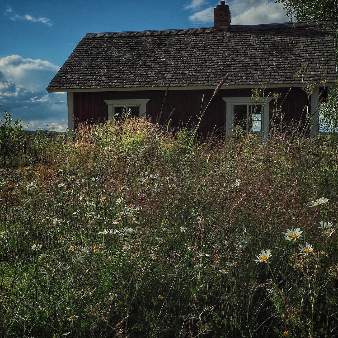 built structure, architecture, building exterior, house, field, no people, country house, plant, grass, outdoors, landscape, abandoned, day, growth, nature, sky