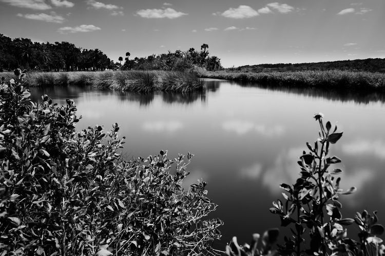 Bulow Creek State Park Art Photography Beauty In Nature Bulow Creek Cloud - Sky Creek Day Film Look Florida Life Growth Lake Longexposurephotography Nature No People Outdoors Palms Plant Plants Reflection Scenics Sky Tranquil Scene Tranquility Tree Vacation Water