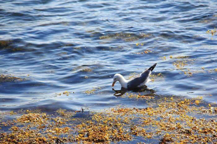 swan.shine Swan Shine Shine BRIGHT Like A DIAMOND. Lake Danmark Blue Sea Sun Animal Swarovski Pet Portraits