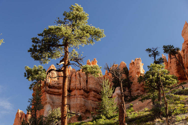 shiny rocks of Bryce Canyon Sky Beauty In Nature Nature Tranquil Scene No People Plant Tranquility Outdoors Bryce Canyon Tree Growth Low Angle View Day Clear Sky Blue Rock Travel Destinations Sunlight Solid History Rock Formation