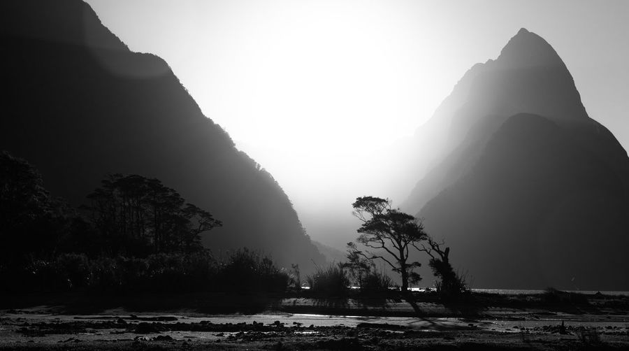 Sky Mountain Tree Nature Tranquility Fog Beauty In Nature Plant Scenics - Nature Tranquil Scene Silhouette No People Day Sun Land Non-urban Scene Sunlight Outdoors Milford Sound Blackandwhite Sunset Sunlight New Zealand