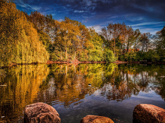 Trees by lake against sky during autumn