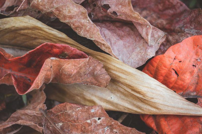 Full frame shot of dried autumn leaves