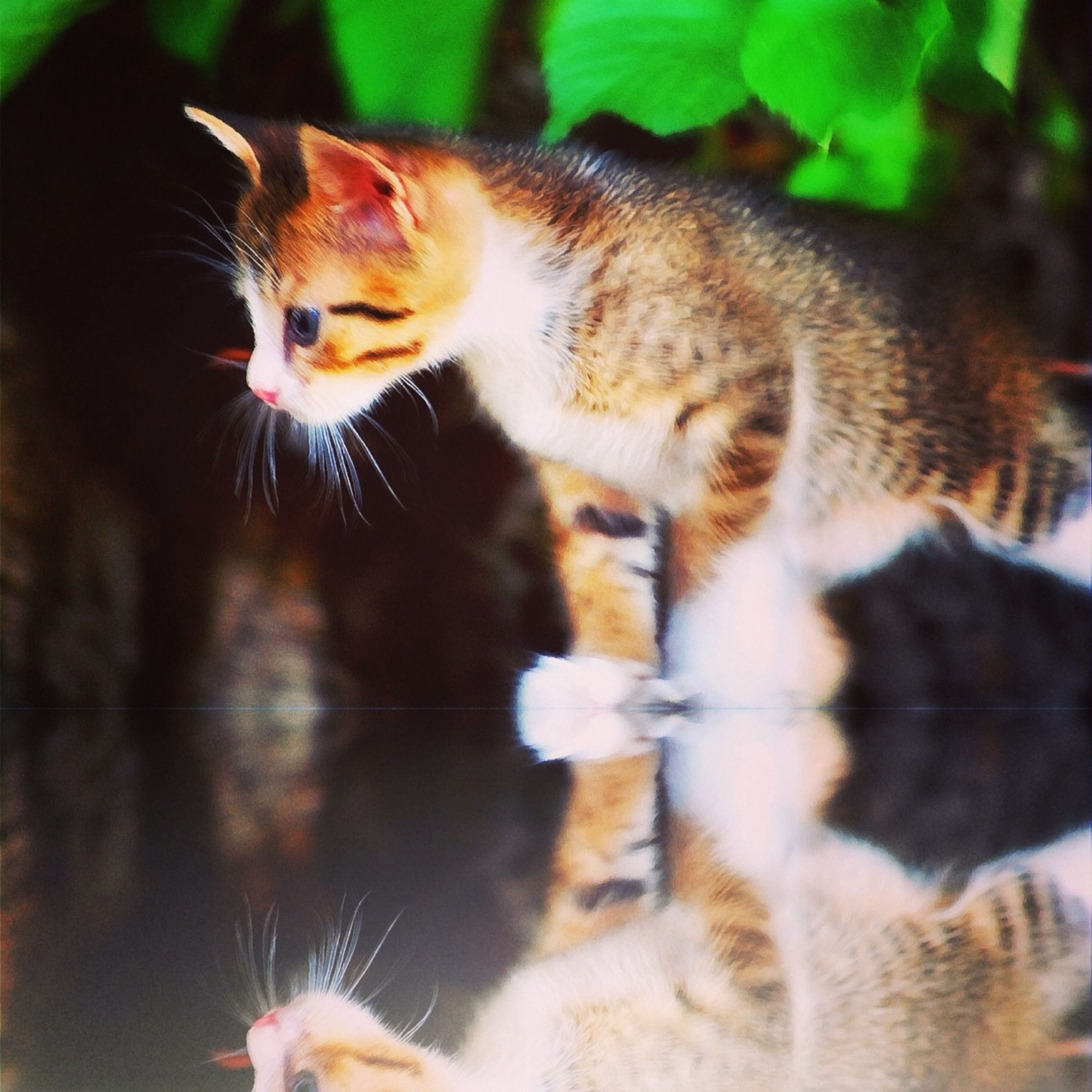 animal themes, domestic cat, one animal, mammal, feline, cat, pets, domestic animals, whisker, close-up, focus on foreground, selective focus, portrait, kitten, looking at camera, sitting, two animals, young animal, no people