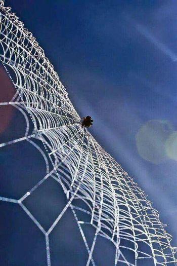 Spider. Naturelovers. Taking Photos Hi! Enjoying Life Eye4photography  The Moment - 2015 EyeEm Awards Gold Series @txemabuenodaz Hello World Hanging Out