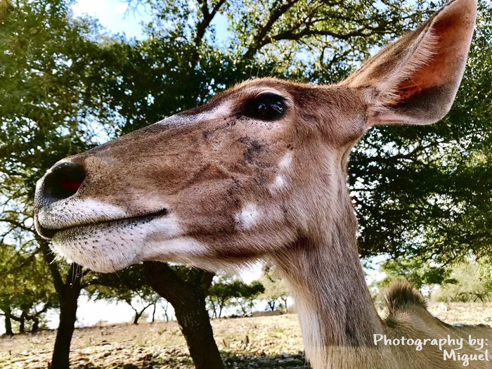 Wildlife Safari Safari Animals HDR Nature Outdoors Close-up Photographer San Antonio Beautiful Photoshoot Photographylovers Mobile Photography Enjoying Life Iphone7 Wildliferanch Animals Photo Shoot EyeEmNewHere