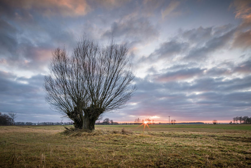 Weide im Oderbruch Bare Tree Beauty In Nature Cloud - Sky Day Field Grass Horizon Over Land Landscape Nature No People Outdoors Sky Sunset Tree
