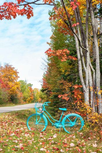 Bicycle by trees in park during autumn