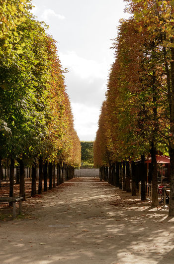 If Trees Could Speak Iftreescouldspeak France Paris ❤ Autumn Beauty In Nature Day Diminishing Perspective Growth In A Row Nature No People Outdoors Scenics Sky The Way Forward Tourist Destination Tranquility Travel Destinations Tree Visual Creativity