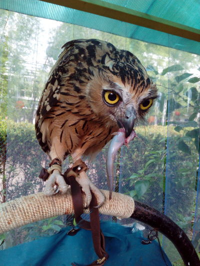 Owl Owl Eyes Owl Eating Perching Bird Finding New Frontiers Animals Animal Themes Animals In The Wild Animal Wildlife No People Day One Animal Nature Close-up Outdoors Tree Mammal