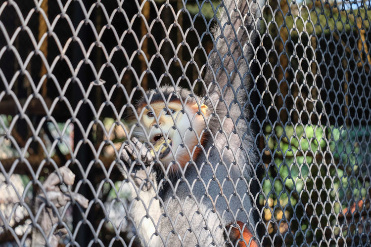 Full frame shot of chainlink fence in cage at zoo