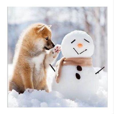 Hey my Bæs ! Sry, ich weiß das Bild kommt spät, aber wir hatten Besuch und dann hab ich Insta für einen Moment voll vergessen. Kommt nicht mehr vor😉 Quot Wen findet ihr süßer? Den Schneemann oder den Fuchs? Auot Fuchs!!!!!