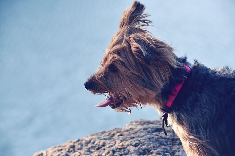 Close-up of dog on sea against sky