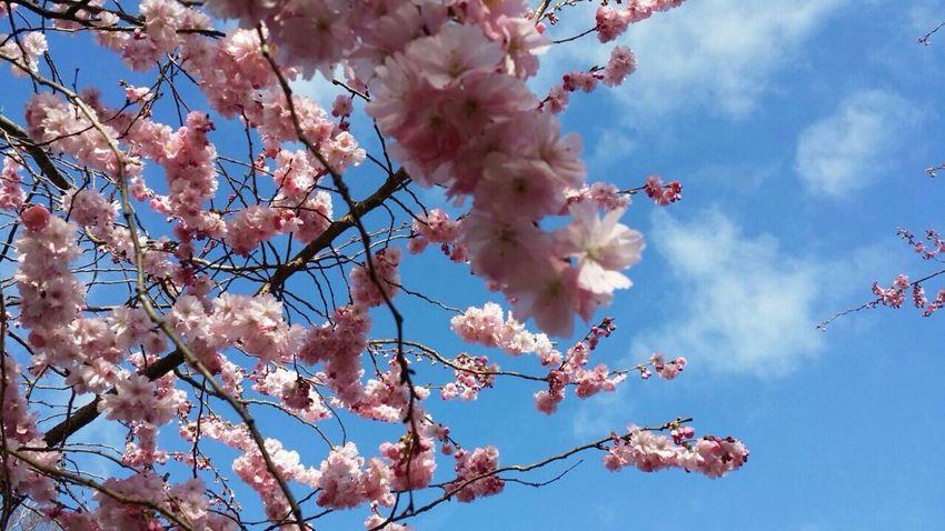Park Tree Flower Céu Flowes Blume Blume🌸 Fiore🌼🌻🌺 Eyem Nature Bello Fiore