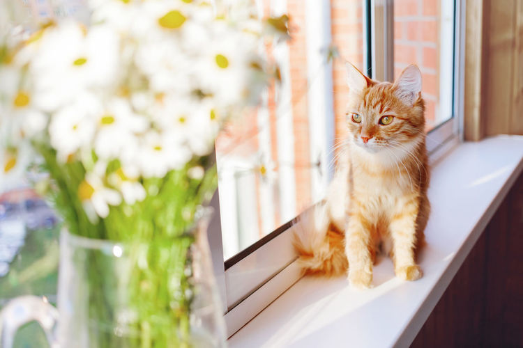 Cat looking up on window