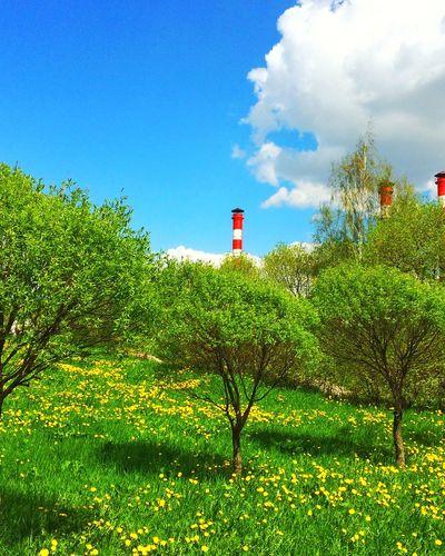 Minsk City Grass Park Tree Trees Minsk Clouds And Sky Cloud Sky Sky And Clouds